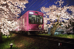 GO!SPEEDY (JB ) Tags: japan train canon temple kyoto shot tram railway arashiyama  cherryblossom  sakura lightup pan panning kansai ef2470mmf28lusm tenryuji    daikakuji  randen    ef1635mmf28liiusm  5dmki 5dmkiii  ef70200mmf28lisiiusm  jb