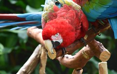 (careth@2012) Tags: portrait nature wildlife beak feathers parrot