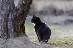 Alert (Lena_CS) Tags: pet cat feline chat gato katze katt