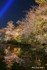(Pic_Joy) Tags: world heritage japan spring kyoto shrine asia blossoms   sakura cherryblossoms  kiyomizudera hanami  higashiyama    unesco