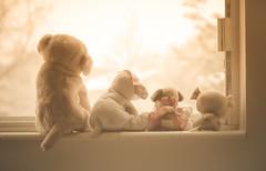 window dogs (auntneecey) Tags: window toys stuffedanimals windowwednesday