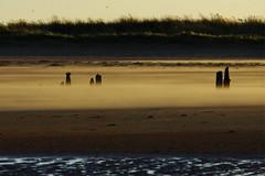 Sand blows across beach (P_1_B) Tags: landscape norfolk sigma rspb titchwellmarsh sigma150500 sonya77 slta77 slta77v sonya77v