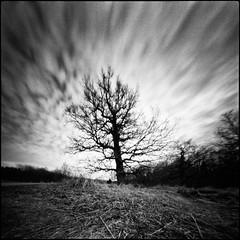 (Hasse Linden) Tags: tree skye 6x6 film clouds analog mediumformat pinhole hp5 rodinal ilford epsonv750 realitysosubtle6x6 rss6x6