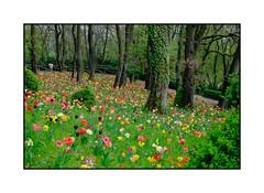 Parco Giardino Sigurt (Pierre_Bn) Tags: italy garden spring xpro italia fuji jardin printemps italie parcogiardinosigurt