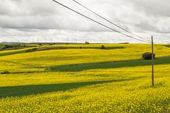 Cables (luisetegt) Tags: primavera cables burgos colza camposdecastilla