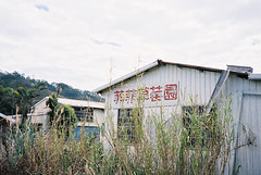 () Tags: house film field grass strawberry kodak farm t5 100 t3 yashica t2 t4 ektar