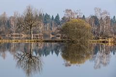 Comme un miroir (callifra7) Tags: pond reflets etang isre arandon canoneos70d efs18135mmf3556isstm