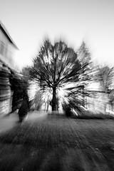 caming zoom (manu abis) Tags: bw tree treeoflife comingzoom