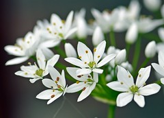 Spring 2016 - 874 LBG (Lostash) Tags: life flowers plants nature spring flora seasons leicesterbotanicalgardens