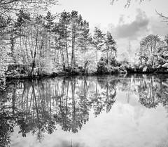 Symtrie (vostok 91) Tags: blackandwhite reflection fuji noiretblanc symmetry reflected arbres parc reflets x20 vende challans symtrie paysdeloire sablire vostok91