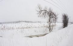 Il neige... sur Mirabel (monilague) Tags: trees winter snow fence season day hiver jour arbres neige janvier saison cloture