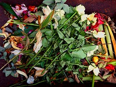 Bouquet in a Rusty Wheelbarrow (bjg_snaps) Tags: flower rose dead sad bouquet dying evocative