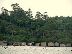 Santa Catarina,Florianpolis.Distrito do Ribeiro da Ilha.FISHERMEN VILLAGE (LUIZ PAULO So Paulo's Eyes) Tags: brazil brasil fishing florianpolis santacatarina pesca ribeirodailha