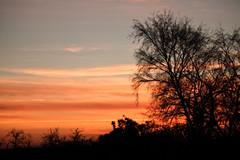 evening sky [explored] (carol_malky) Tags: light orange tree lines evening silhouettes explored abigfave paintedbymothernature