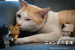 06 (= ann =) Tags: cat toy photostory yotsuba danbo danboard nyanboard