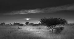 B&W Sunrise (Sheldrickfalls) Tags: sunrise southafrica krugernationalpark mpumalanga krugerpark kruger satara sataracamp krugersunrise