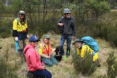 Hawkweed partnerships (Environment + Heritage NSW) Tags: weed volunteers volunteer hawkweed kosciuszko kosciuszkonationalpark orangehawkweed volunteerprogram weedcontrol weedmanagement huntinghawkweed orangehawkweedcontrolprogram weedvolunteerskosciuszkonationalpark weedprogram