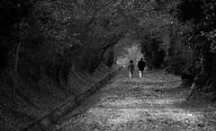 promenade (cc .. jeckle) Tags: autumn light tree monochrome forest automne canon canal leaf couple walk lumiere promenade foret arbre ballade chemin calme feuille branche profondeur 760d