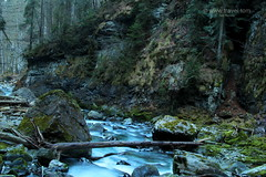 Mysterious Gorge (www.travel.tom) Tags: wood forest germany bavaria moss stones steam current damp
