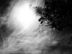 untitled (ChrisRSouthland (Athens; catching up)) Tags: blackandwhite sun tree contrast still mood moody branches grain backlit grainy intothesun strongcontrast em1 movingclouds