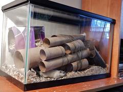 DSCN1449 the Mothership has landed (therovingeye) Tags: pets gerbil smallanimals gerbilhabitat