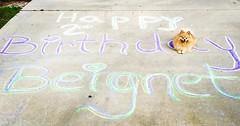 Happy 2nd Birthday to the most handsome PomPom ever - Beignet Chrisdeen Beauregard #TooCute #TooFluffy #TwoYearsOld #PomLife #pomeraniansofinstagram (tammy anthony baker) Tags: instagram pomeranian 2nd birthday tmabaker tammyanthonybaker puppy beignet dog pet