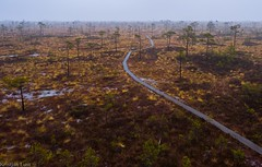Ingatsi trail on Kuresoo bog (BlizzardFoto) Tags: nationalpark flood trail bog rada soomaa raba kuresoo rahvuspark ingatsi
