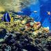 Larger of the aquariums