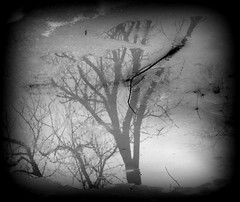 IMG_7078 (Mat_B) Tags: park winter white lake black cold reflection tree ice nature water puddle photography natural state walk branches january down hills area moraine upside thaw defiance 2016
