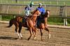 "2015-12-19 (29) r6 Xavier Perez on #6 Redheaded Stranger (JLeeFleenor) Tags: photos photography md marylandracing laurelpark marylandhorseracing jockey جُوكِي ""赛马骑师"" jinete ""競馬騎手"" dżokej jocheu คนขี่ม้าแข่ง jóquei žokej kilparatsastaja rennreiter fantino ""경마 기수"" жокей jokey người horses thoroughbreds equine equestrian cheval cavalo cavallo cavall caballo pferd paard perd hevonen hest hestur cal kon konj beygir capall ceffyl cuddy yarraman faras alogo soos kuda uma pfeerd koin حصان кон 马 häst άλογο סוס घोड़ा 馬 koń лошадь xman xavierperez chestnut maryland"