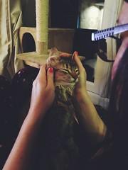 He's a stroke fan (Kenster79) Tags: cute cat kitten pussy meow pussycat