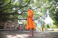 follow the roots. (Tapas Ghosh Photography) Tags: travel tree love peace buddha buddhist peaceful monk buddhism thai gaya meditation tradition om shanti cultural buddhistmonk travelphotography buddhistculture buddhisttree