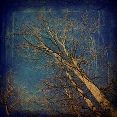 Trees (jeanne.marie.) Tags: blue trees aqua turquoise squareformat scratched 100x iphoneography iphone5s image6100 100xthe2016edition 100x2016