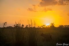 DSC_0114 (Promao80) Tags: lago tramonto cuba moron cavallo viaggio vacanza calesse