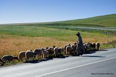 Il Pastore-- Marocco (Il Maestro...) Tags: marocco 1001nights meknes pastore gregge canoneosd50 1001nightsmagiccity
