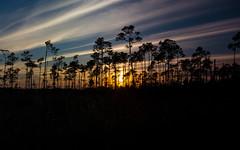 IMG_0172 ENP (JRCmoreno) Tags: winter sunset grass unitedstates florida swamp everglades evergladesnationalpark tress sabana