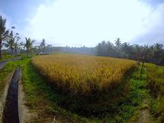 Beauty of Ubud
