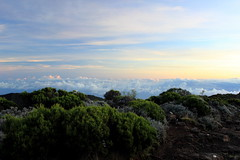 Head in the clouds (clotildegaudicheau) Tags: cloud green nature sunrise landscape trail paysage runion volcan randonne dolomieu
