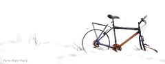 Au bout du voyage ... ( P-A) Tags: photos hiver ruine neige vol destin campagne vélo rouille abandonné tordu minimalisme déchet abusif entretien négligence enfoui simpa©