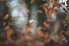 Still motion (Tammy Schild) Tags: winter blur tree nature leaves forest woods bokeh branches foliage 402 helios