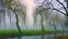 Foggy Willows (Nomadic074) Tags: trees nature fog reflections foggy kingspark nottinghamshire willowtrees riveridle