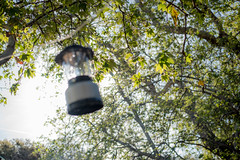 Lantern In The Trees (jimsheaffer) Tags: california camping beachcamping leocarrillo leocarrillostatebeach nikond750