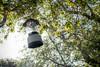 Lantern In The Trees (jimsheaffer) Tags: california camping beachcamping leocarrillo leocarrillostatebeach nikond750