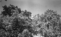 cherry_blossoms (Judy M. Boyle) Tags: urban blackandwhite tree film monochrome cityscape streetphotography baltimore cherryblossums 127film baltimoremd caffenol filmdeveloping homedeveloping caffenolc washingtongmonument rerapan100