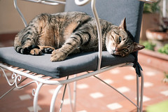Perrera Gatuna (GuilleDes) Tags: fotolog gato silla desenfocado