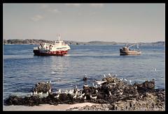 AT SEA. (adriangeephotography) Tags: sea photography coast seaside nikon ship kodak slide adrian kodachrome gee vivitar nikkormat series1 3585mmf28 adriangeephotography