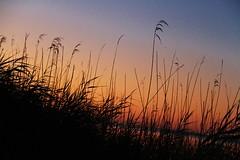 Lake Albert sunsets. Meningie #4 (robynbrody) Tags: sunset sky lake water grass evening dusk albert australia southaustralia coorong