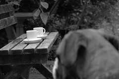 afternoon coffee for Kahn? (christinemargaretlynch) Tags: bw coffee afternoon tea boxer littledoglaughednoiret