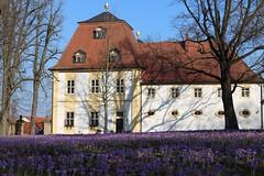 Schloss Oberschwappach (Klaus R. aus O.) Tags: shadow sky tree window facade canon tile spring ast dorf village purple lock fenster himmel crocus lila schloss dach schatten baum krokus fassade frühling bough ziegel 650d oberschwappach knetzgau