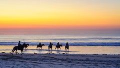 Surf & turf (Howie44) Tags: horses colour beach animals silhouette sunrise sand equine